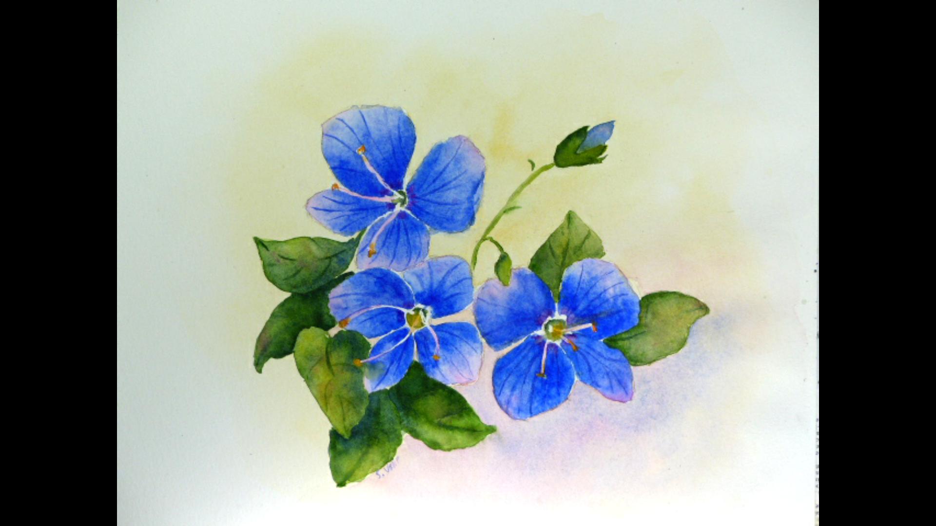 Aquarelle : Petites fleurs