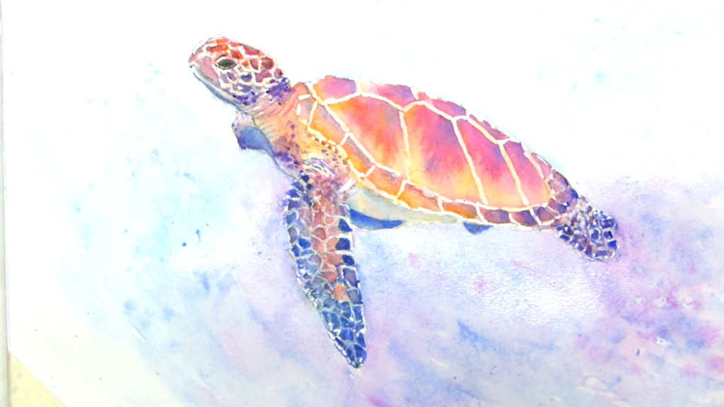 Aquarelle : Mandarine, tortue de mer