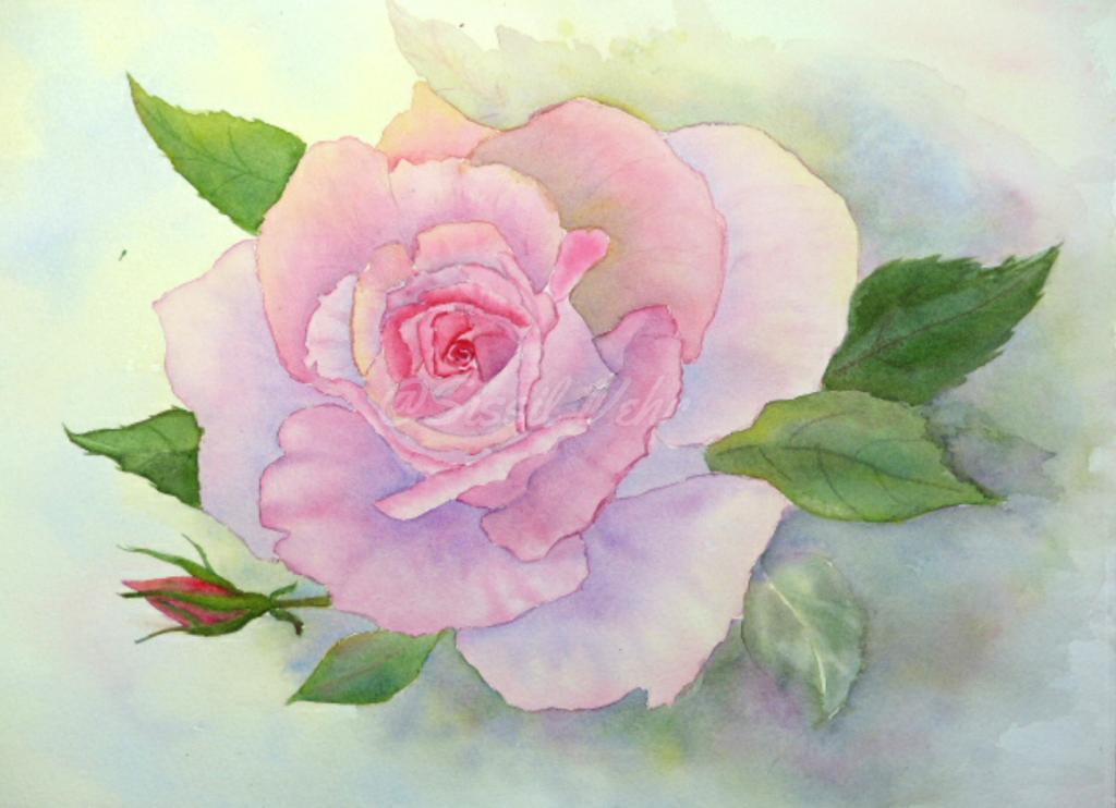 Aquarelle : Rose du matin