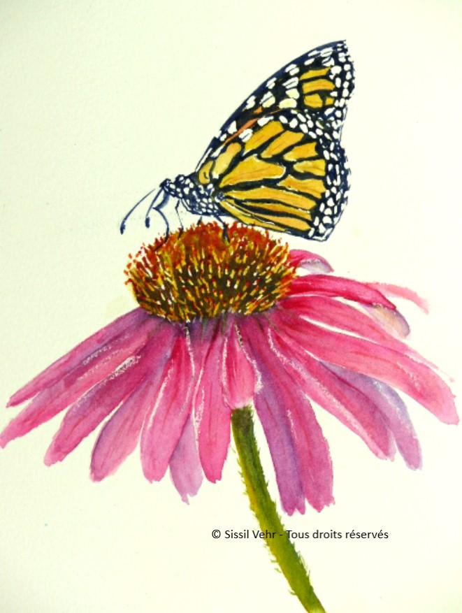 Aquarelle : papillon butinant