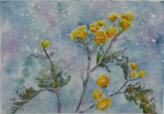 Petites fleurs d'hiver