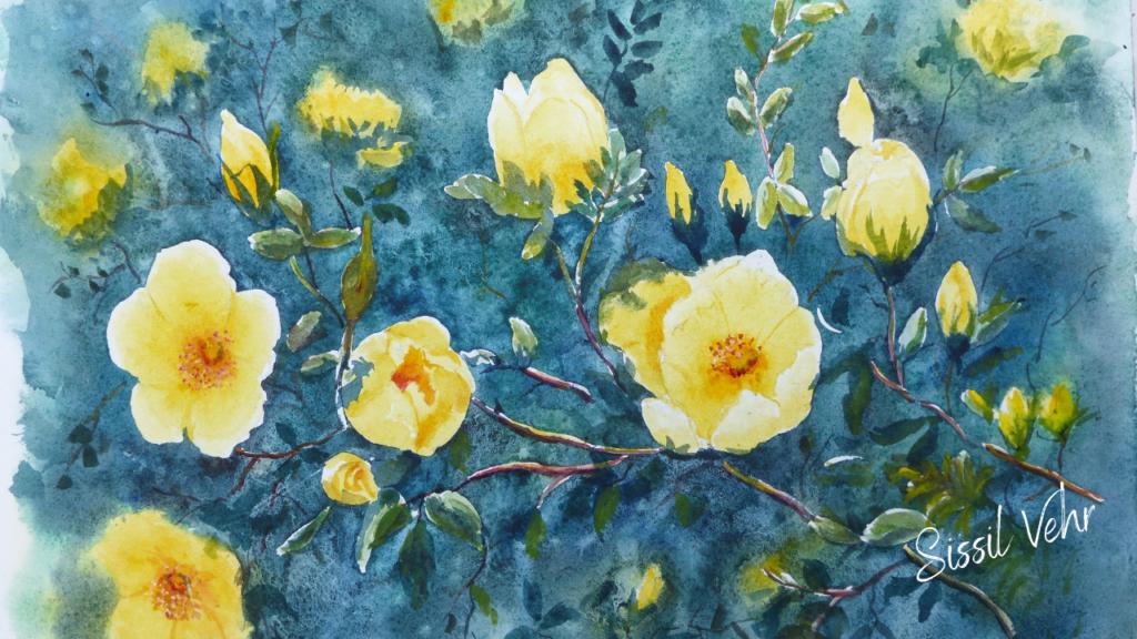 Aquarelle : peindre des fleurs de rosier banks