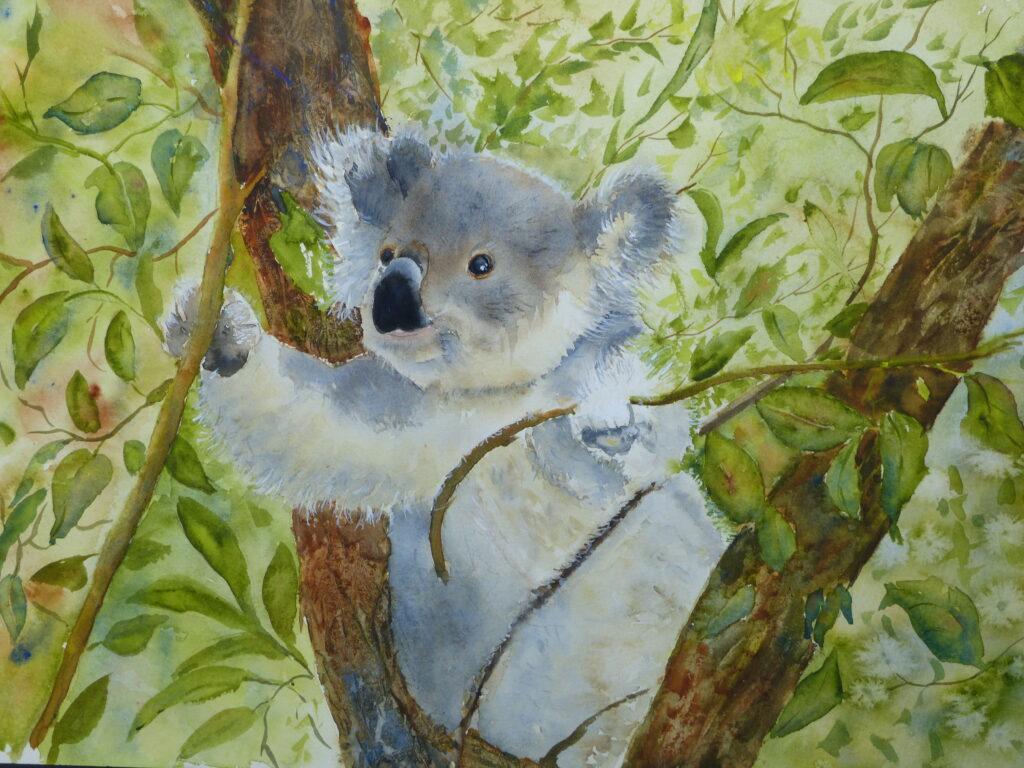 aquarelle : Koala