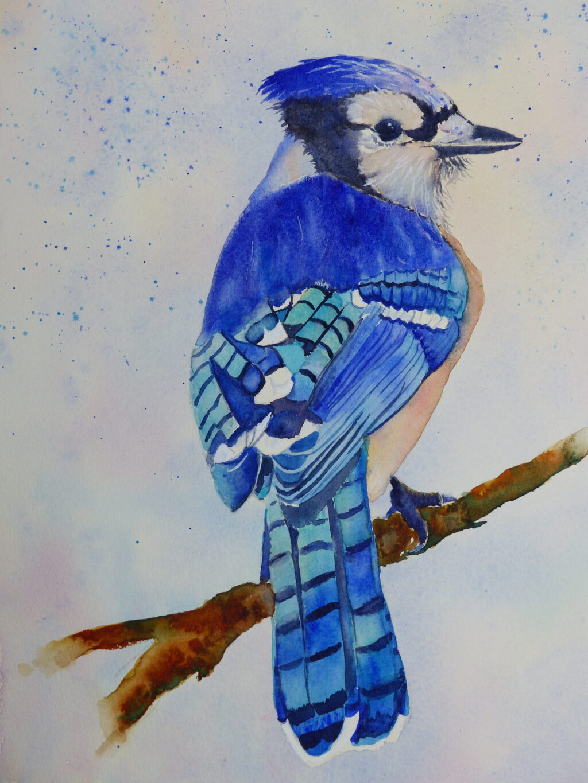 Aquarelle : Geai bleu